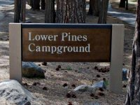 Lower Pines